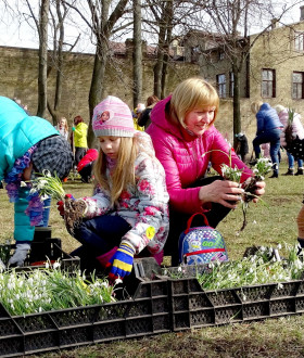 Invitation to Snowdrop Planting Event at Mill Square