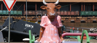 The Rocking Cow